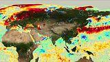 Avrupa'da orman yangınlarını tetikleyen aşırı sıcaklar denizlerin de ısısını yükseltiyor