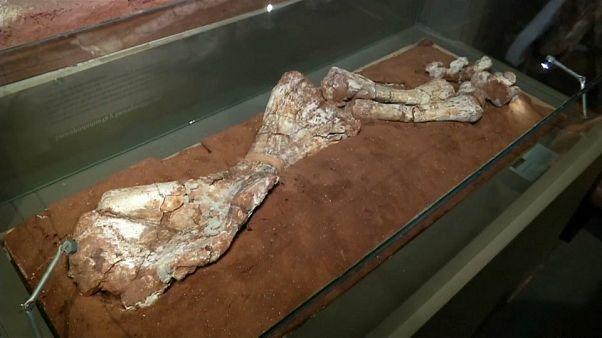 Hallado en Argentina el dinosaurio más grande del Periodo Triásico