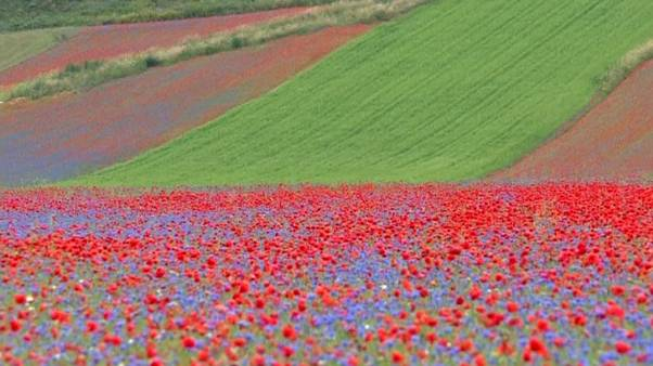 Italian landscape stuns as thousands of flowers bloom