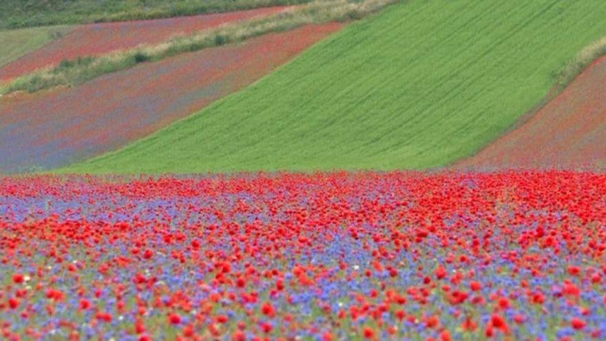Italian landscape stuns as thousands of flowers bloom