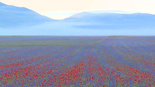 Blumenmeer in Umbrien