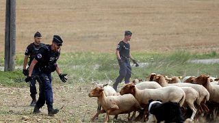 Κτηνοτρόφοι κατά... Tour de France