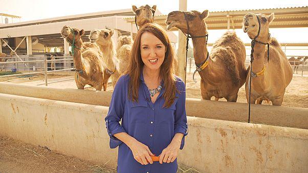 Inspire Middle East : le camelccino, vous connaissez?