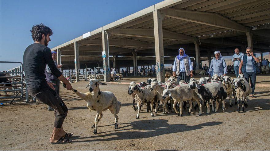 Şanlıurfa'da kurban pazarı
