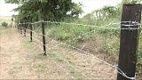Bulgaristan domuz gribinden korunmak için Romanya sınırına dikenli tel çekiyor