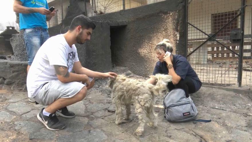 Görög tűzvész: állatmentő helyiek