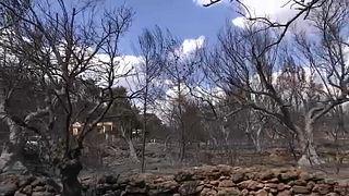 Пожары в Греции: процедура опознания тел будет сложной