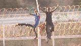 Près de 600 migrants entrent de force à Ceuta