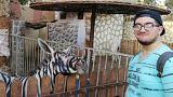 Hayvanat bahçesinde boyalı eşeklerden 'zebra'