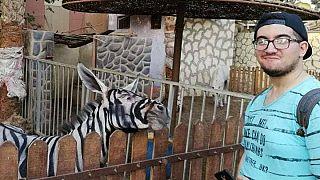 باغ وحش مصری الاغ رنگ شده را گورخر جا زد