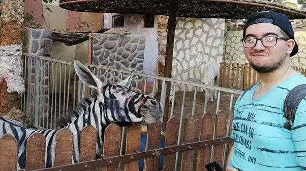 Un zoo de Egipto acusado por pintar a un burro para parecerse a una cebra