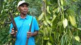 Soaring prices of vanilla affecting Madagascar farmers