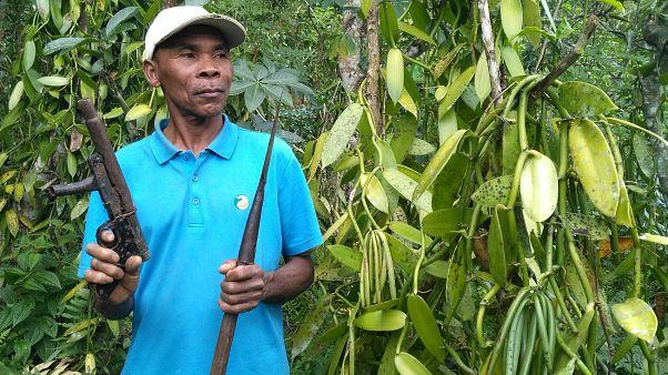 Madagaskar: Kampf der Bauern gegen Vanille-Diebe