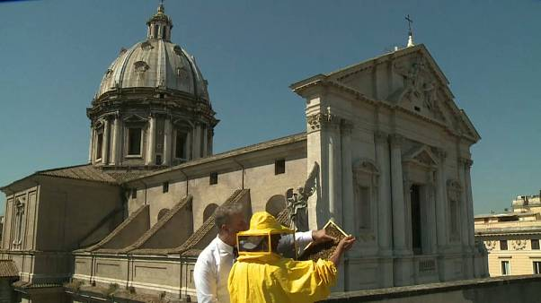Rome: Bees used as pollution monitors