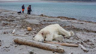Kreuzfahrt-Wächter erschießt Eisbär