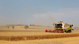 """""""Extreme Dürre"""": Deutschlands Landwirten drohen hohe Verluste"""