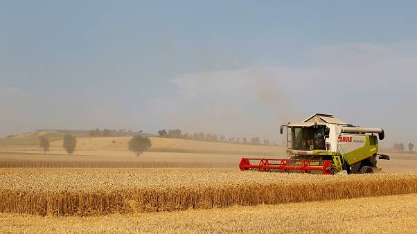 Allemagne : les ravages de la sécheresse dans l'agriculture