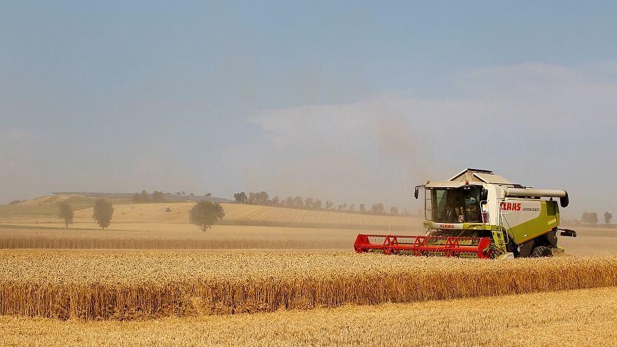 Seca extrema afeta colheitas na Alemanha