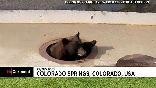 Aknában ragadt egy medve Coloradóban