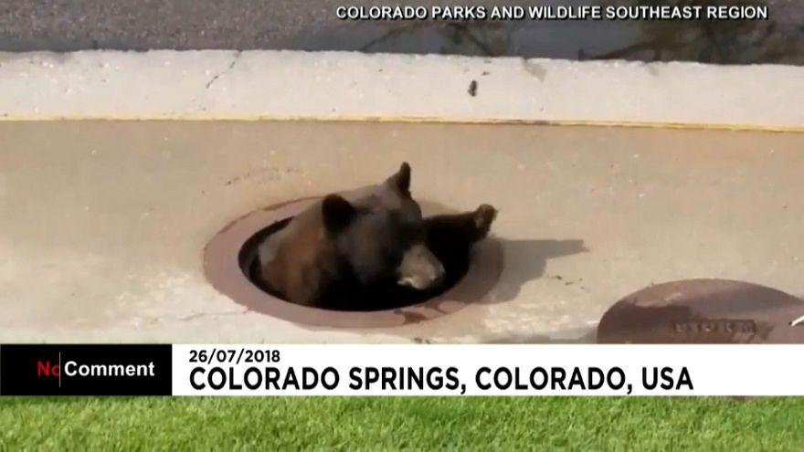 Κολοράντο: Αρκούδα παγιδεύτηκε σε...αγωγό!