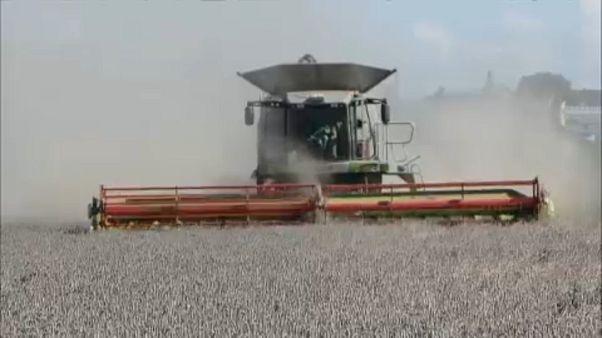 Γερμανία: Τις σοδειές καταστρέφει η παρατεταμένη ξηρασία