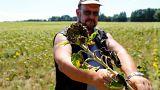 Dürre Ernte in Deutschland wegen anhaltender Trockenheit