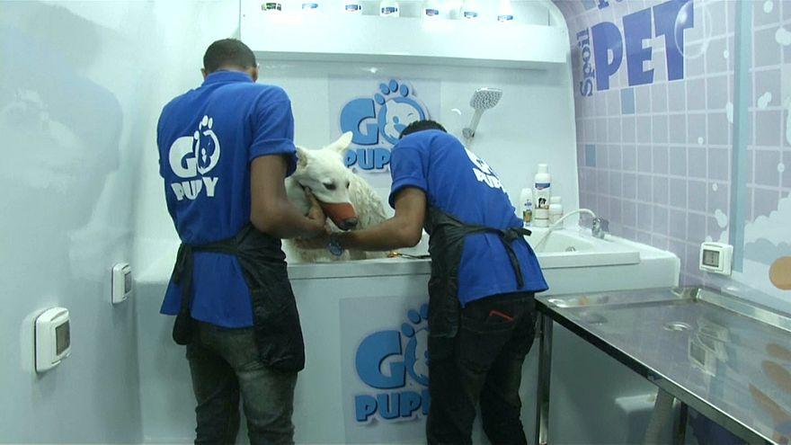 شاهد: سيارة متنقلة تقدم جلسات لتقليم الأظافر وتصفيف الفراء لقطط وكلاب القاهرة