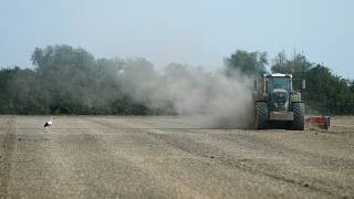 A combine harvester throws up dust in Germany