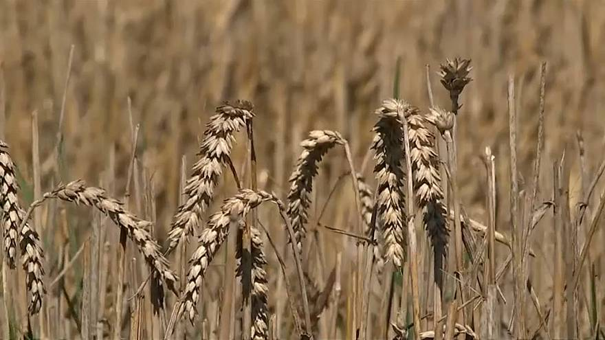 Убытки немецких фермеров составят миллиард евро