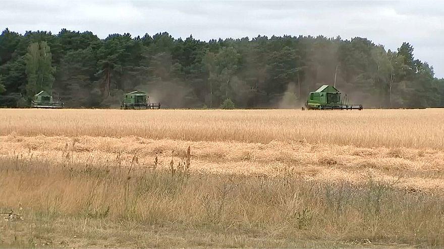 Coup de chaud sur l'agriculture allemande