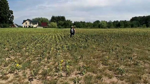 Pérdidas millonarias para los agricultores alemanes