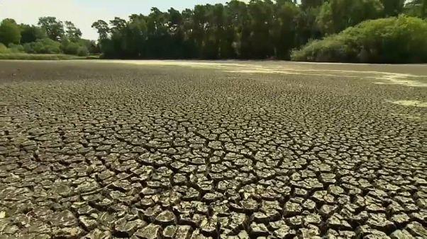 Heatwave deaths to soar dramatically, global study finds
