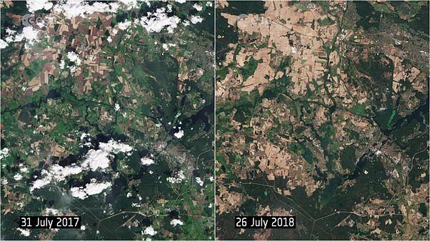 Queste foto dal satellite mostrano una Berlino marrone per la siccità