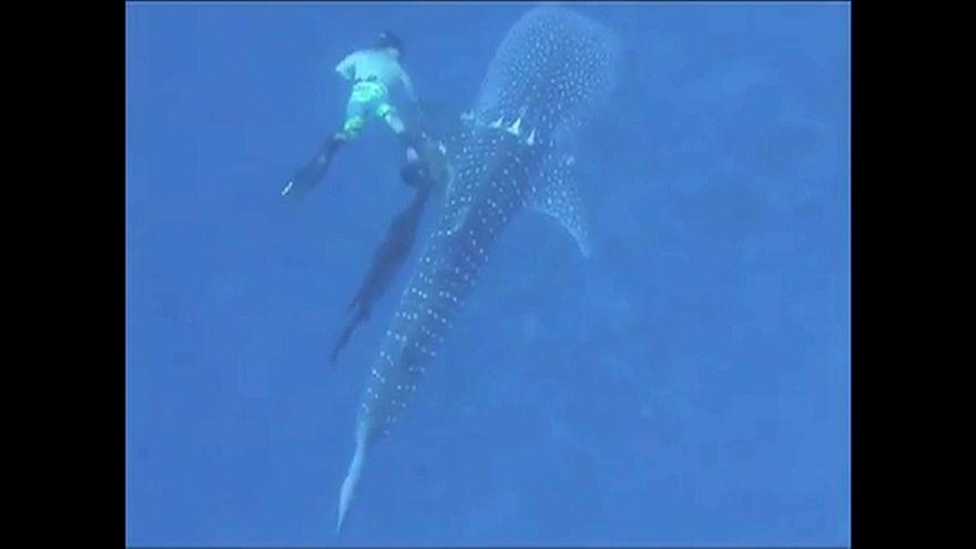 Tatil için dalış yapan aile köpek balığını ağlardan kurtardı