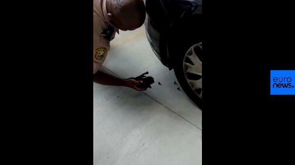 شاهد: شرطة ميامي تنقذ قطا علق في محرك في سيارة