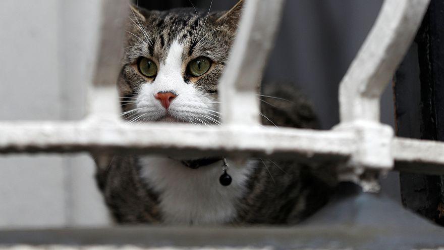 """قطٌ ينقذ مالكته المريضة ويحصد لقب """"قط العالم"""" في بريطانيا"""