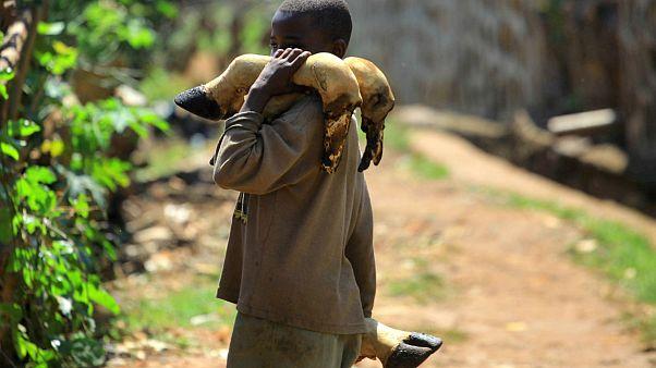 WHO figyelmeztetés: gyorsan terjedhet az Ebola