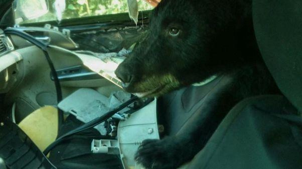L'habitacle d'une voiture dévasté par un ours dans le Colorado