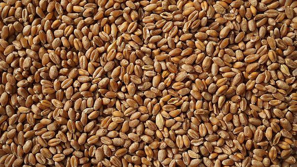 احتياطي مصر الاستراتيجي من القمح يكفي لأربعة أشهر فقط