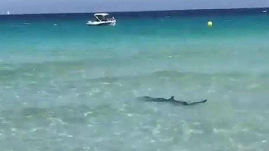 Hai-Alarm am Strand auf Mallorca