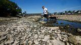 هزاران ماهی در رودخانه راین آلمان از گرما تلف شدند