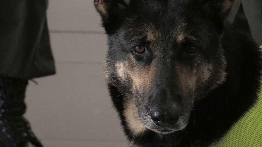 Una perra antidrogas tan buena que un cartel colombiano la quiere muerta