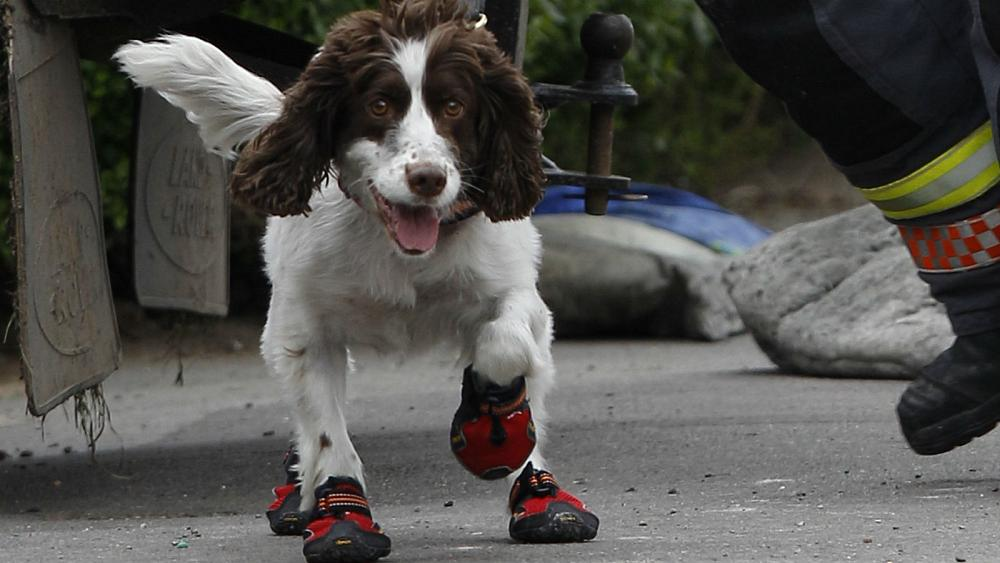 Swiss police urge owners to put dogs in shoes during heatwave