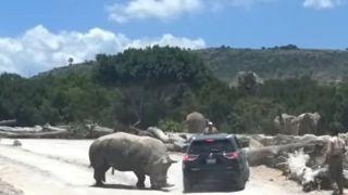 """Ревнивый"" носорог напал на туристов"