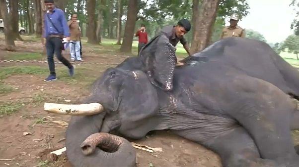 خدمات فاخرة من فئة خمس نجوم لفيلة محمية هندية