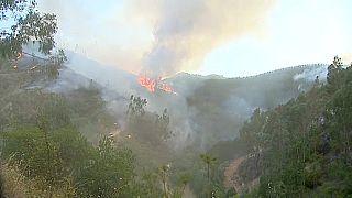 Bis zu 46 Grad: In Portugal brennt's