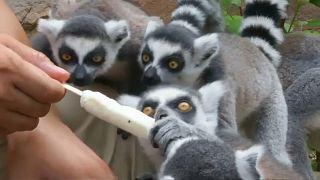 للحيوانات نصيب من المثلجات في حديقة صينية لمواجهة الحر