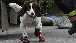 شرطة سويسرا تشن حملة لإلباس الكلاب أحذية خلال موجة الحر الشديد