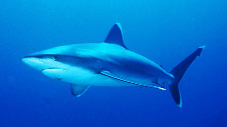 موت سائح تشيكي بهجوم لسمكة قرش في مصر
