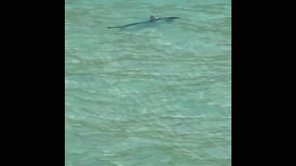Shark seen off Majorca beach, forces evacuation